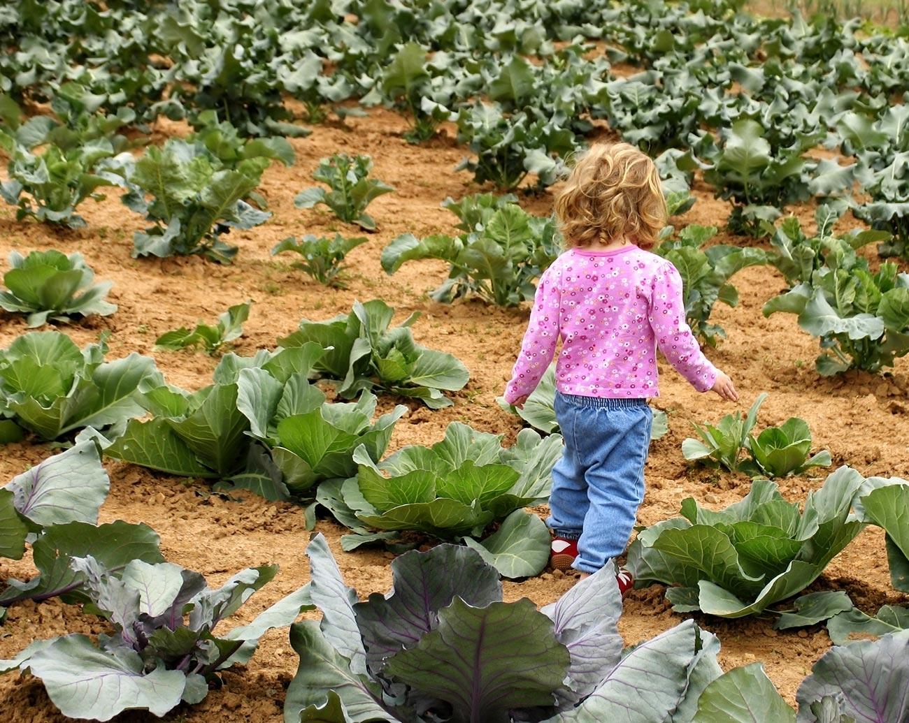 OPEN FARM EXPERIENCE